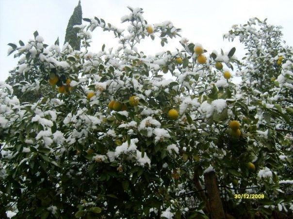 Отдых в зимней Абхазии